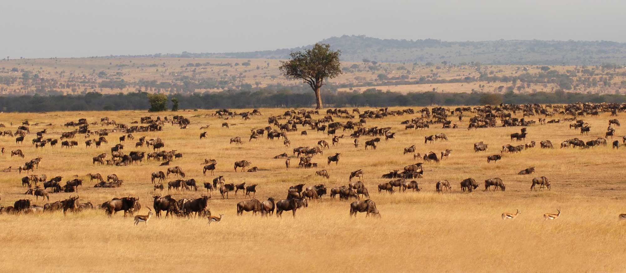 Des moments incroyables sur la terre d'Afrique